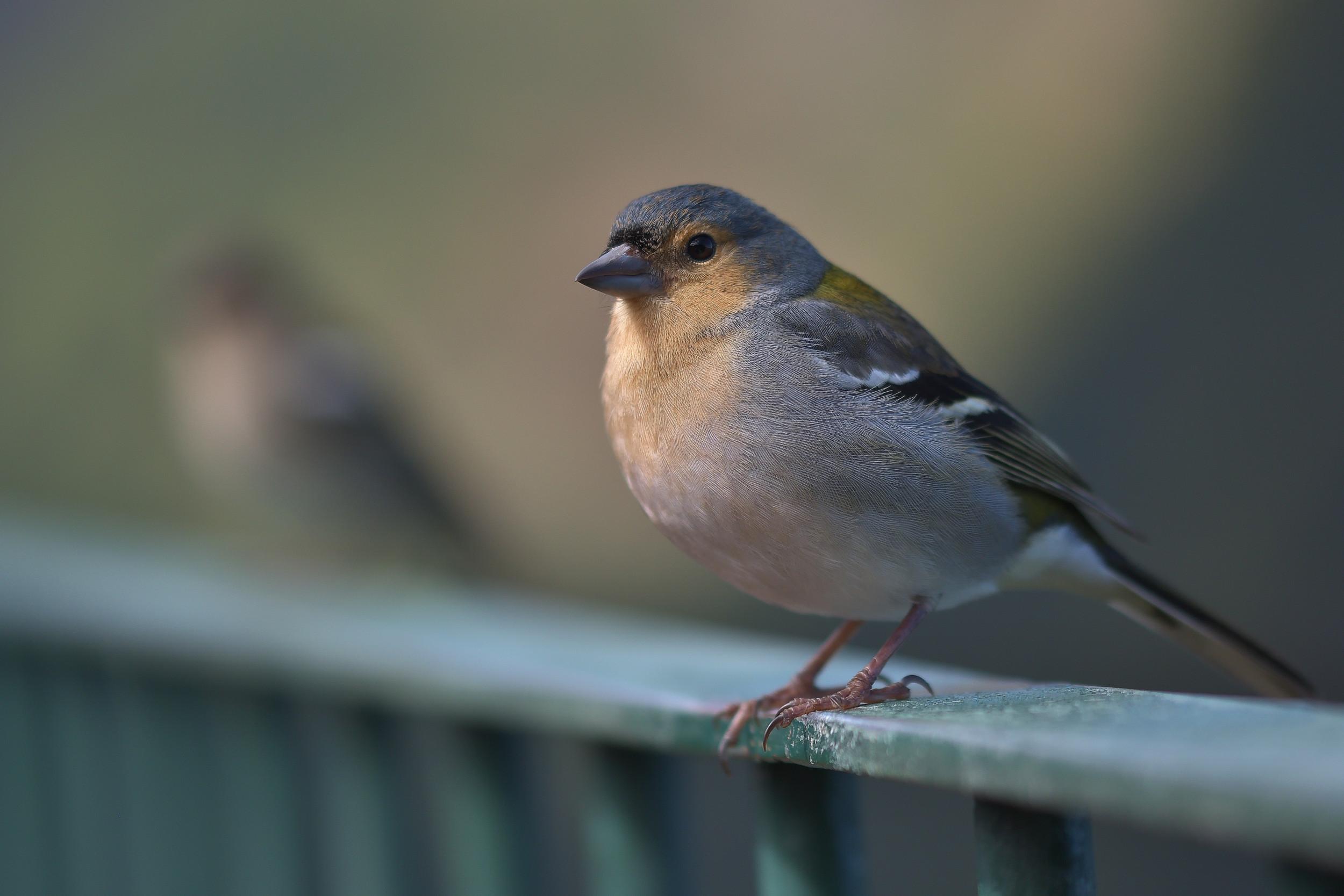 bird on madeira
