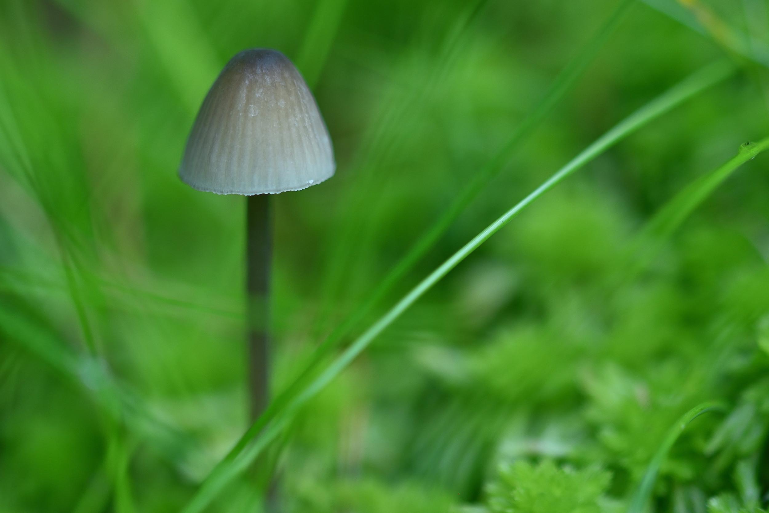 a little mushroom
