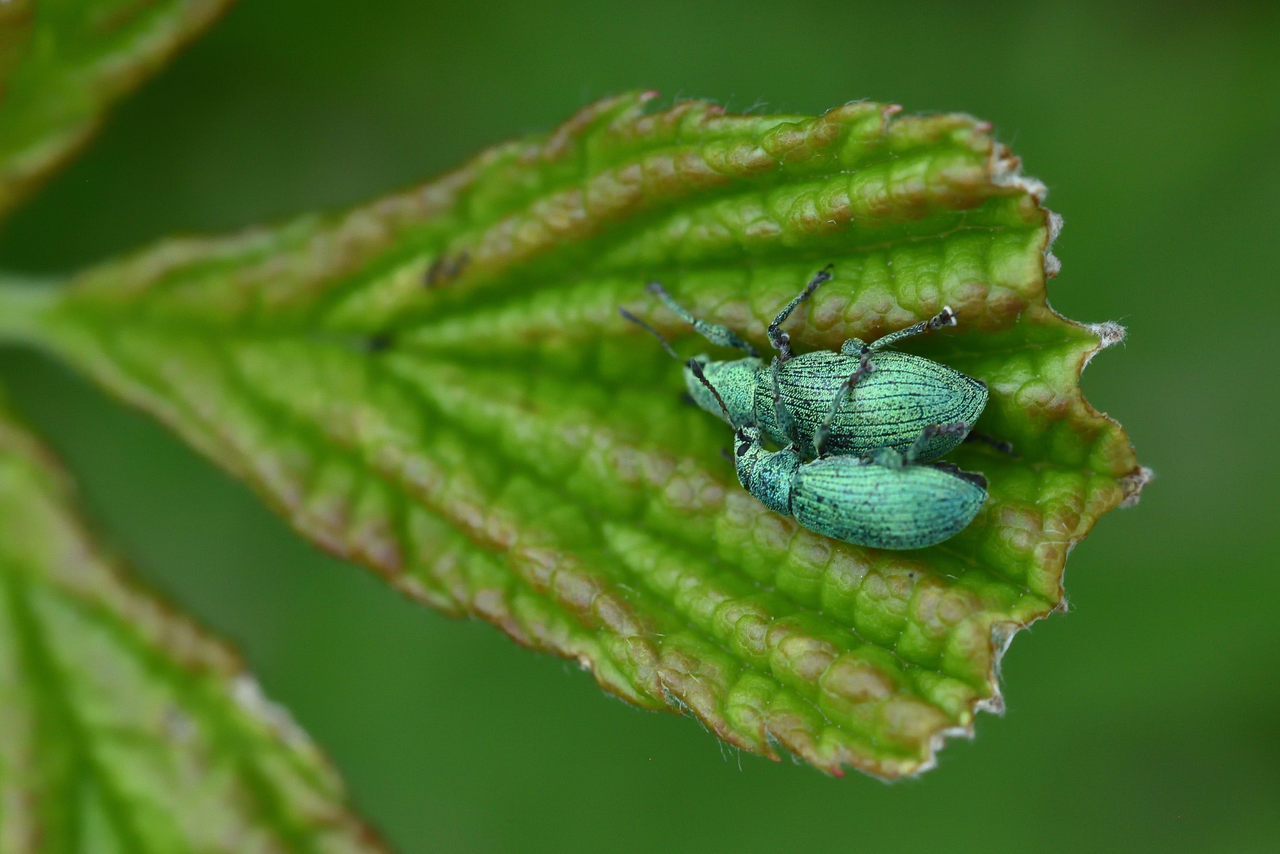 two green bugs